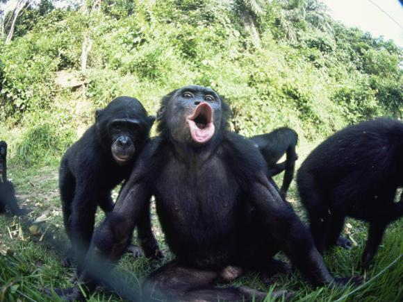 Bonobo at Paramount Theatre Seattle